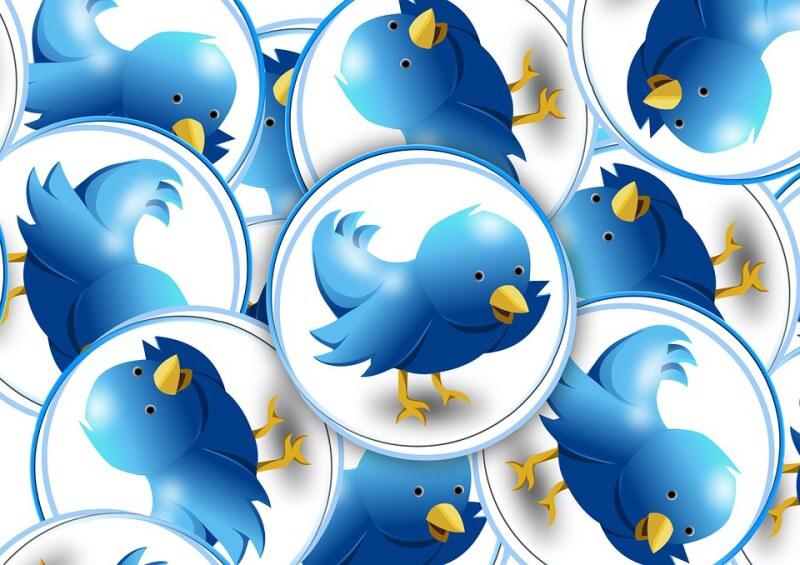 twitter ptáci